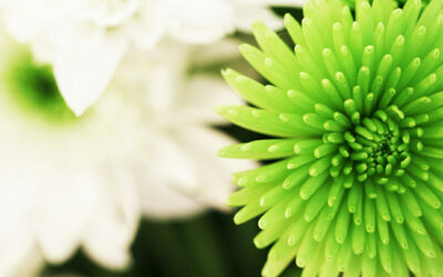 Green Power with Plant Stem Cells